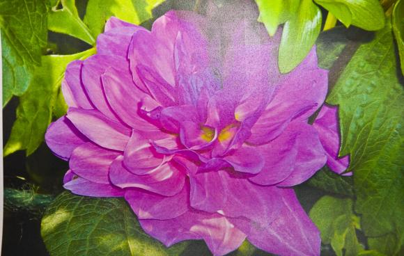 Brackla In Bloom 2013 (5)
